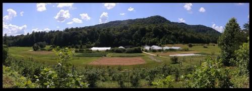 Noticing: Farm happenings June 25