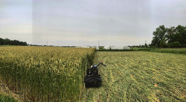 Rolling the Rye
