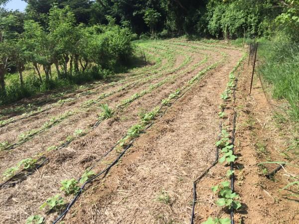Farm Happenings for September 7, 2019