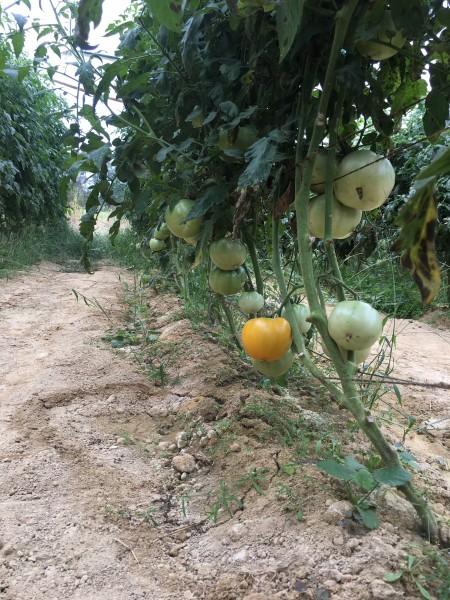 Farm Happenings for October 14, 2019