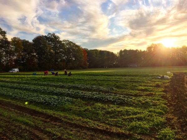 Week 19 - Peak Fall Veggies! The Summer CSA begins to wind down...
