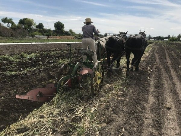 Farm Happenings for May 8, 2020