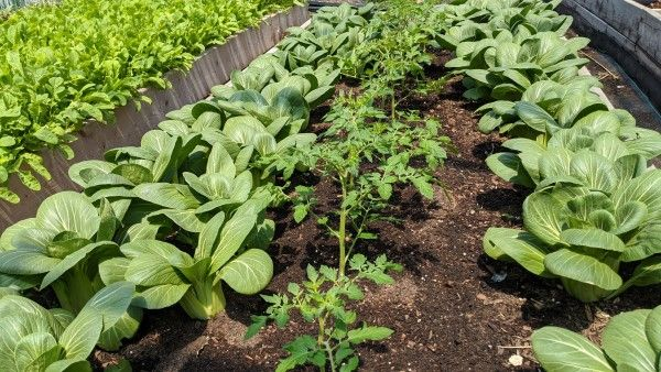 Farm Happenings for May 27, 2020