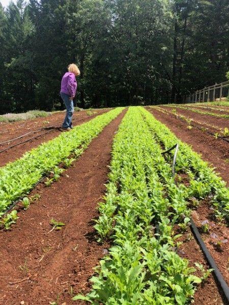 Farm Happenings for week of May 31, 2020