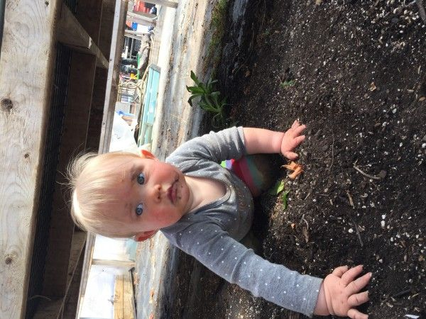 Week 4 - Weeds, weeds, weeds and drought! More strawberries for sale with shares!
