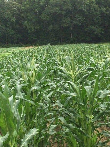 Farm Happenings for June 29, 2020