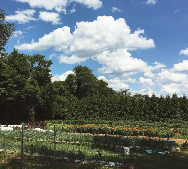 Farm Happenings for July 7, 2020