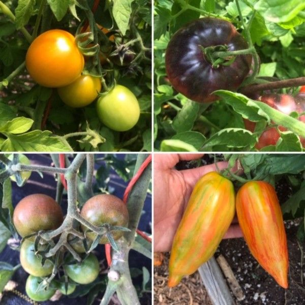 Farm Happenings for August 6, 2020