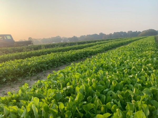 Farmer John Writes: Playing the Field(s)