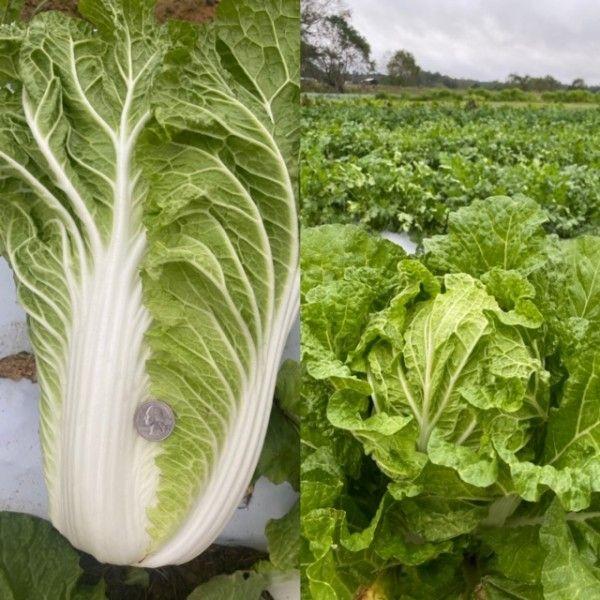 Farm Happenings for October 26, 2020