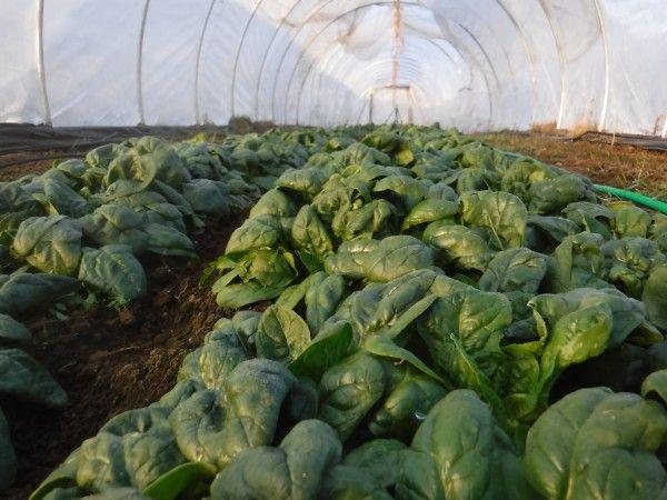 November 27 Farm Happenings