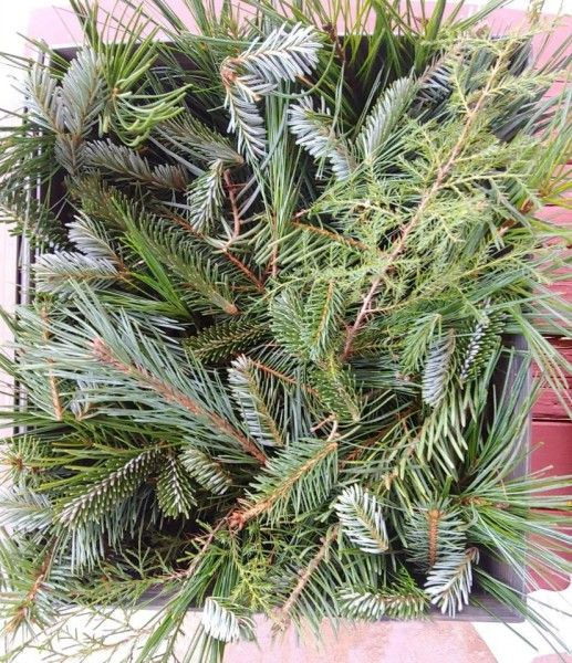Christmas Tree Share 2020
