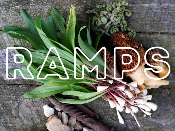 Week 7: Ramping up!