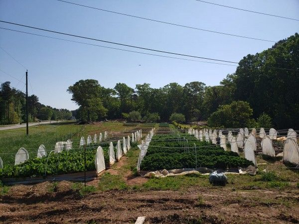 A look at the new Atlanta Harvest