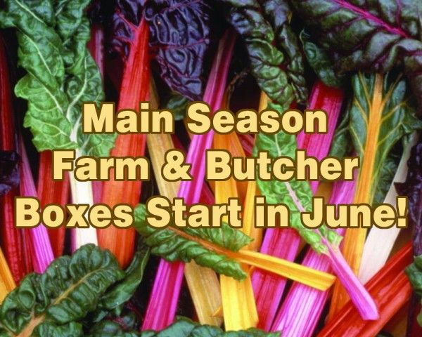 Farm Happenings 5/10/2021: Main Season is right around the corner! / Update from Dig Deep Farm
