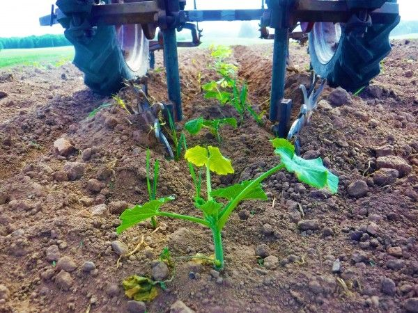 6.11.21 Farm Happenings