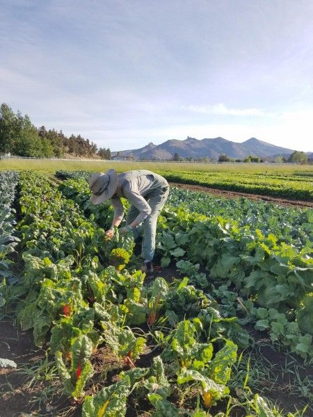 June on the Farm