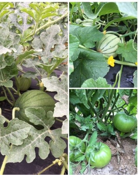 Farm Happenings for June 21st Week