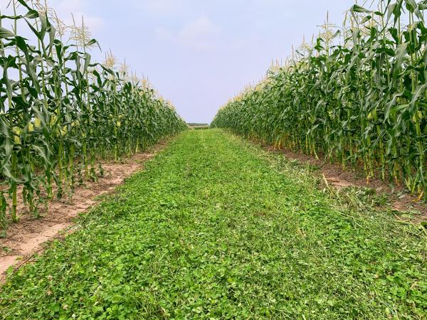 Farm Share Week 8 Newsletter
