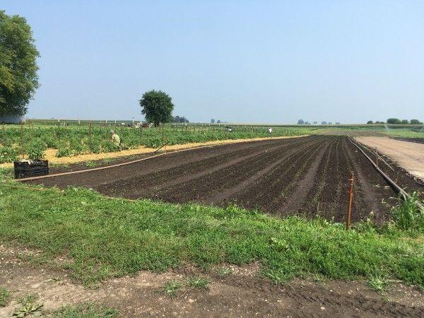 Farm Happenings for July 28, 2021: Blue Moon is hiring