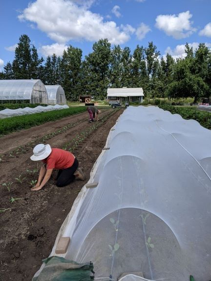Farm Share - Week of July 26