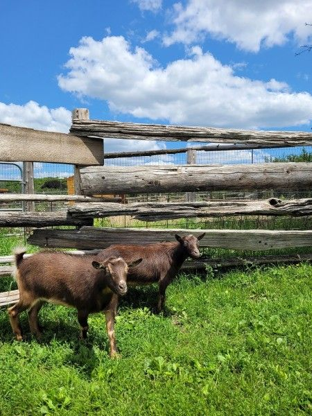 Farm Happenings for the week of August 3, 2021