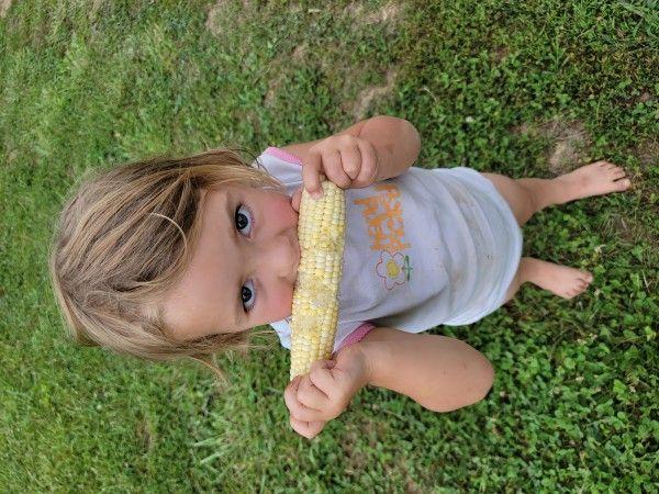 Sweet Corn Season has begun