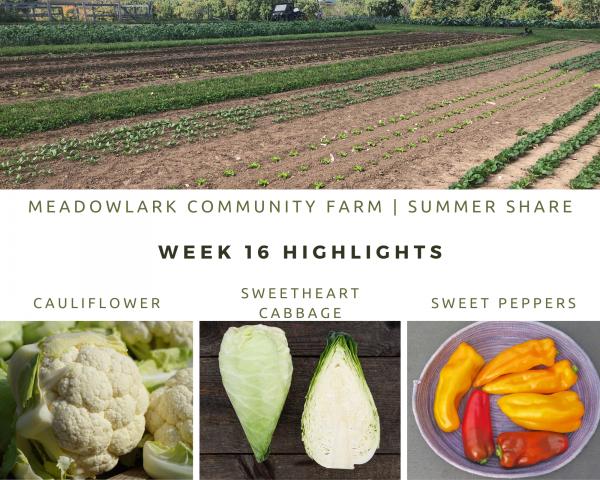 Summer Share: Week 16