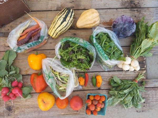 Fall CSA Box #15 (Click continue Reading to see whole newsletter)