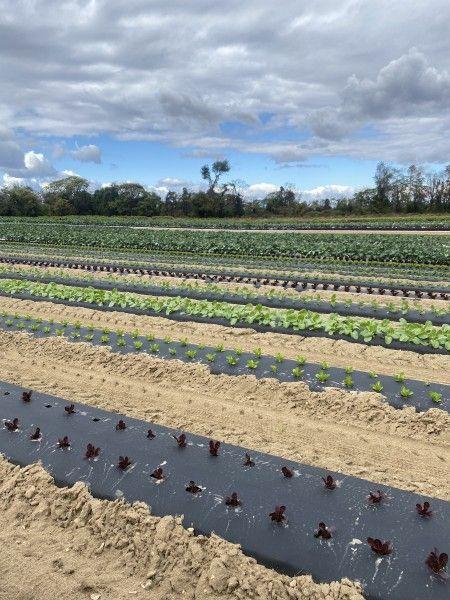 2021 D&V Organics CSA Week 25